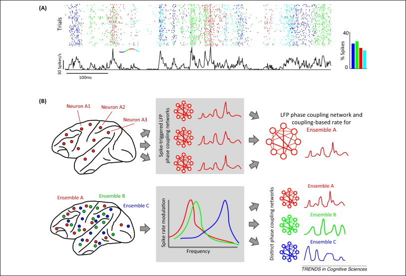 Neural population coding combining insights from microscopic and download full size image ccuart Choice Image