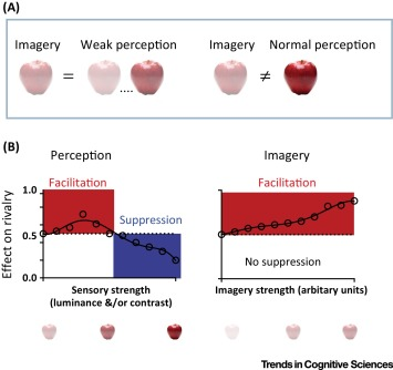 Mental Imagery: Functional Mechanisms and Clinical