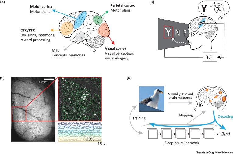 Mind Reading and Writing: The Future of Neurotechnology - ScienceDirect