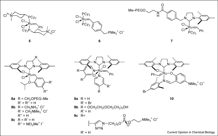 olefin metathesis for chemical biology