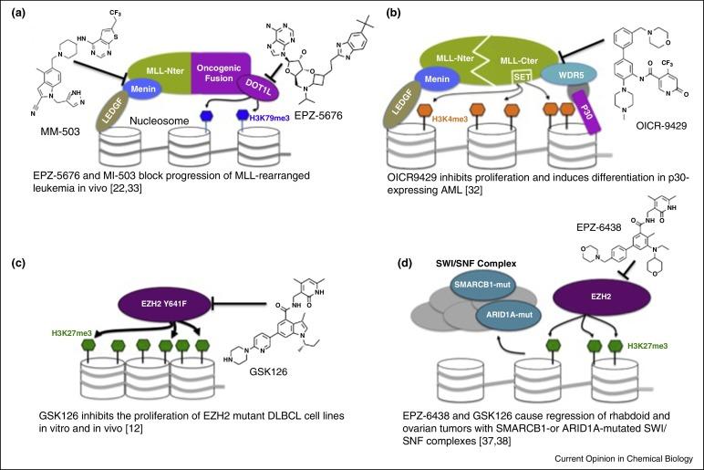 Methyltransferase inhibitors for modulation of the epigenome