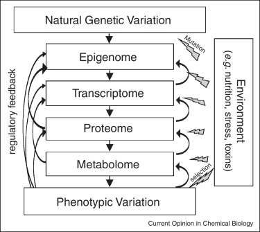 Genetic Makeup Of An Organism Classy Considerations When Choosing A Genetic Model Organism For