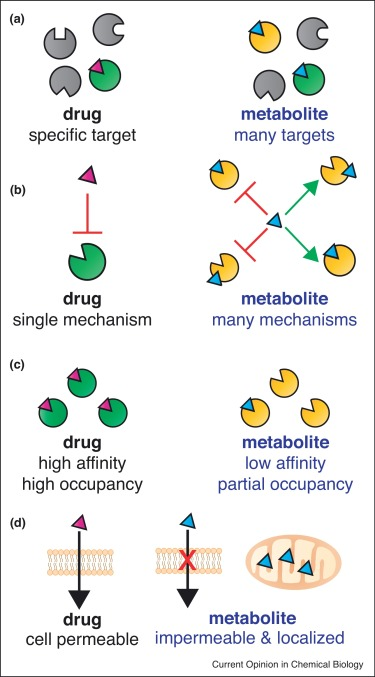 Enigmatic Chemical Tag Is Altered In >> Epigenetic Regulation By Endogenous Metabolite Pharmacology