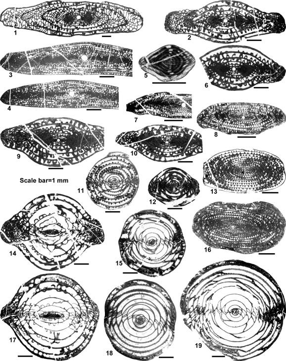 Permian fusulinid biostratigraphy of the Baoshan Block in western ...