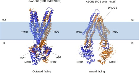 Not only P-glycoprotein: Amplification of the ABCB1-containing