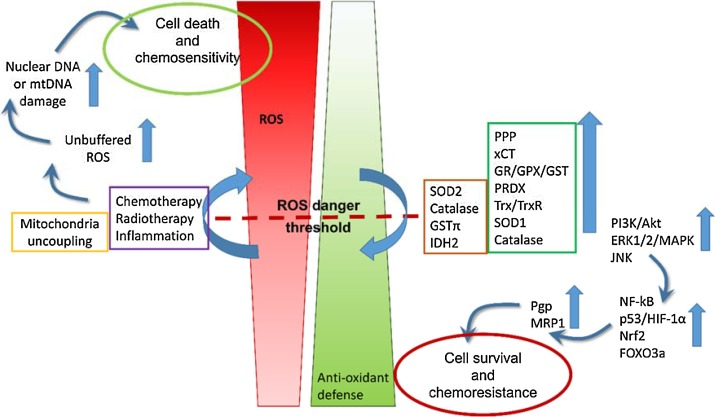 What sustains the multidrug resistance phenotype beyond ABC