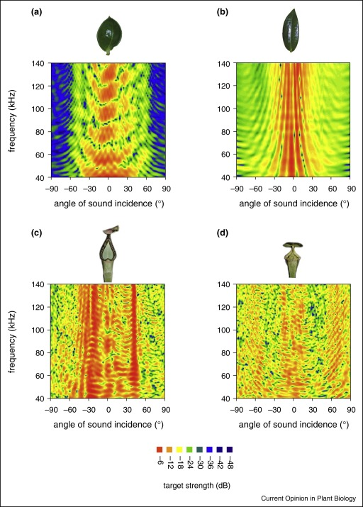 Acoustic communication in plant–animal interactions