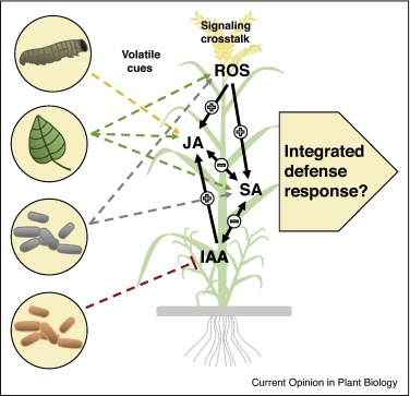 Volatiles As Inducers And Suppressors Of Plant Defense And Immunity Origins Specificity Perception And Signaling Sciencedirect