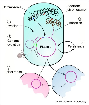 an evolutionary perspective on plasmid lifestyle modes sciencedirect
