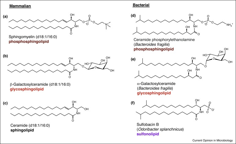 Sphingolipids In Host Microbial Interactions Sciencedirect