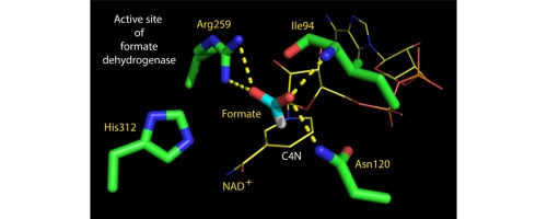 Characterization of a new acidic NAD+-dependent formate dehydrogenase from thermophilic fungus Chaetomium thermophilum