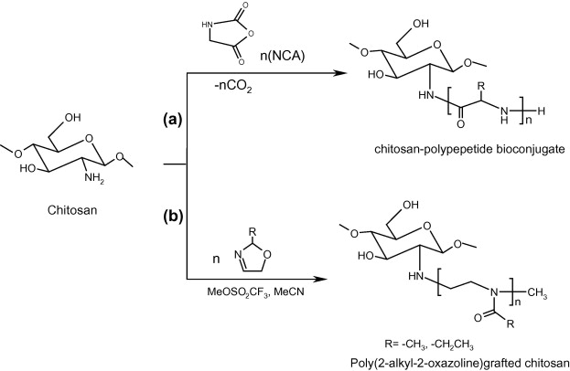 Chitosan-modifications and applications: Opportunities galore