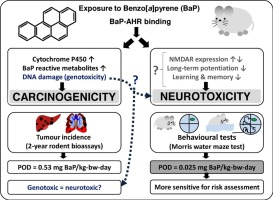 The Role Of Exposure To Neurotoxic >> Neurotoxicity May Be An Overlooked Consequence Of Benzo A Pyrene