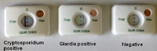 giardia cryptosporidium chek