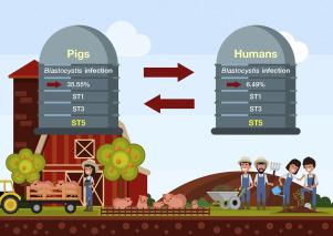 Blastocystis subtype 5: Predominant subtype on pig farms