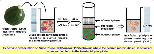 three phase protein