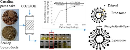 Selective Extraction Of Phospholipids From Food By Products By Supercritical Carbon Dioxide And Ethanol And Formulating Ability Of Extracts Sciencedirect