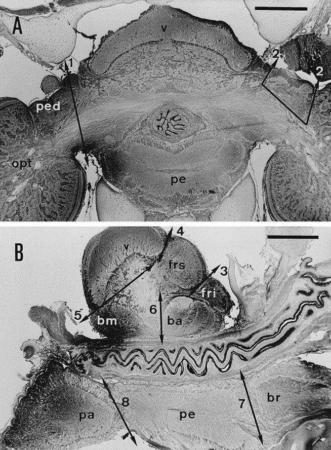 Parallel regional quantification of choline acetyltransferase and the central nervous system of sepia officinalis ccuart Images