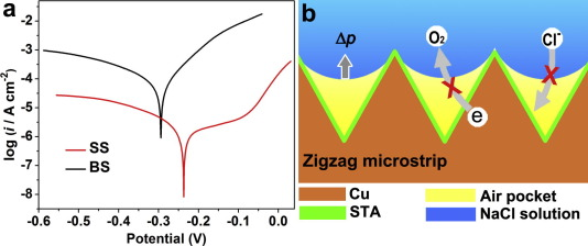 Hierarchical growth of cu zigzag microstrips on cu foil for b the schematic mechanism of corrosion resistance when ss contacts the aggressive nacl solution ccuart Image collections