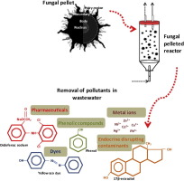 Fungal pelleted reactors in wastewater treatment applications and graphical abstract publicscrutiny Image collections