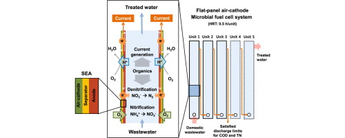 Complete nitrogen removal by simultaneous nitrification and