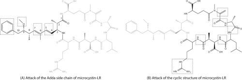 microcystin