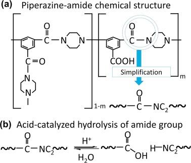 Acid Catalyzed Hydrolysis Of Semi Aromatic Polyamide Nf Membrane And