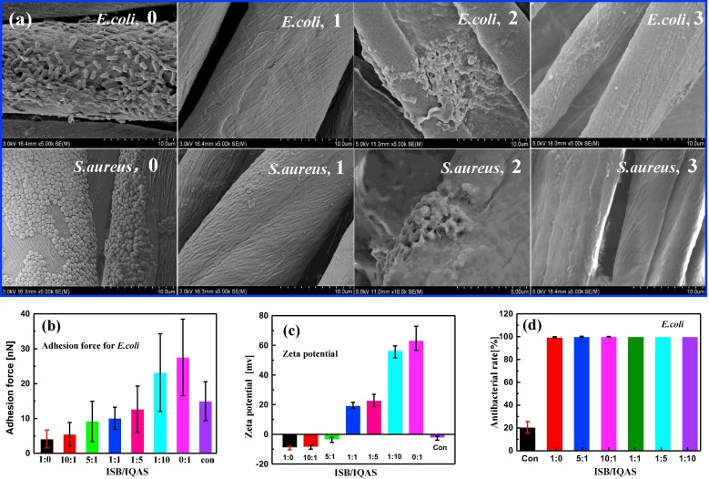 New insights into synergistic antimicrobial and antifouling