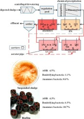 Start-up of a full-scale SNAD-MBBR process for treating sludge