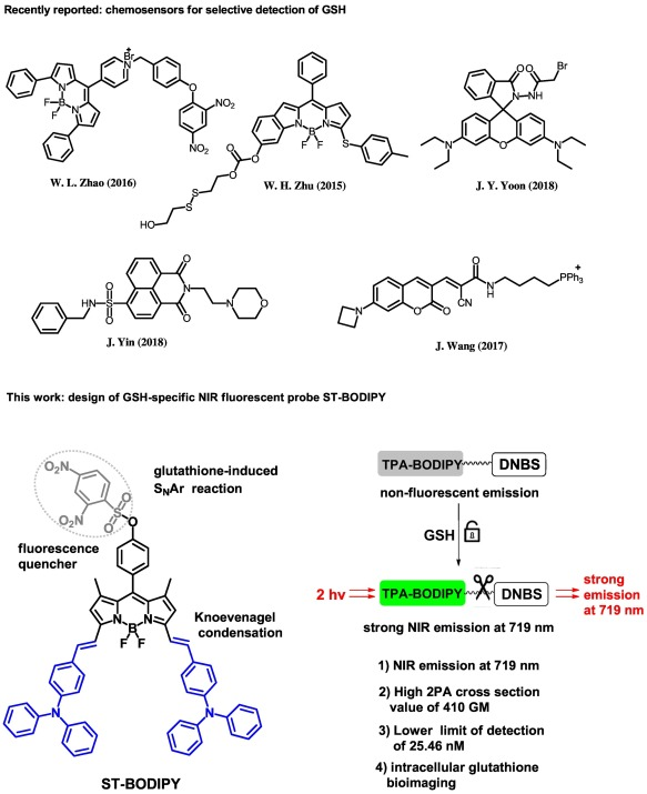 A highly sensitive two-photon fluorescent probe for