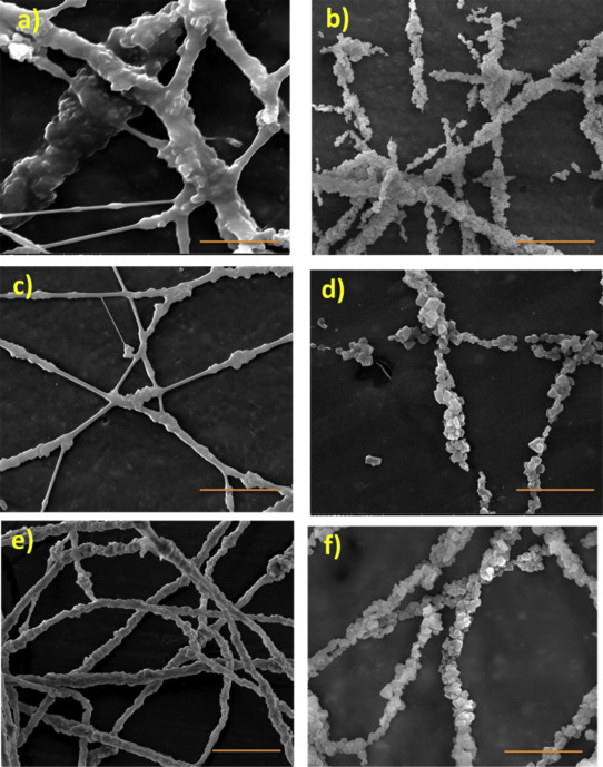 Electrospun zeolite-Y fibers: Fabrication and morphology