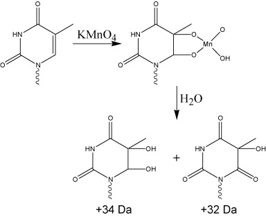 Investigation of the reactivity of oligodeoxynucleotides