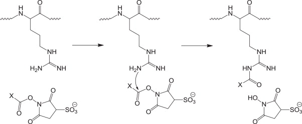 Gas phase dissociation behavior of acyl-arginine peptides