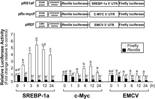 Lipid accumulation stimulates the cap-independent