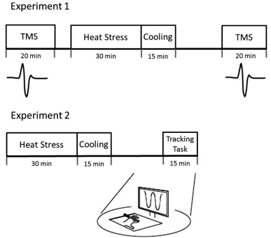 Whole body heat stress increases motor cortical excitability and ...