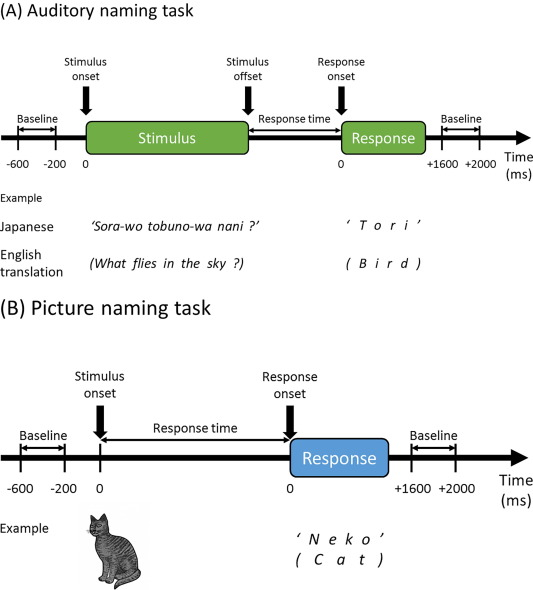 Spatiotemporal dynamics of auditory and picture naming-related high