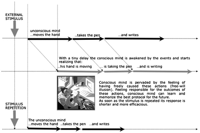 The Functional Role Of Free Will Illusion In Cognition The
