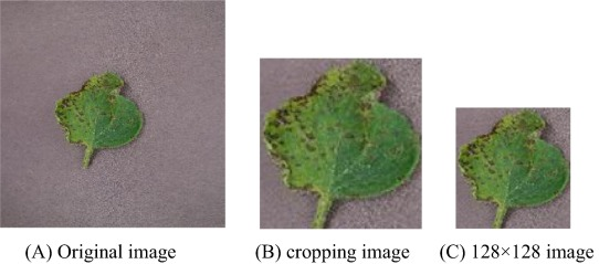 Three-channel convolutional neural networks for vegetable leaf