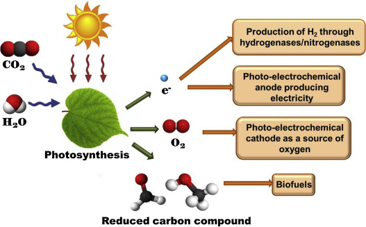 Recent Advances In Photosynthetic Energy Conversion Sciencedirect