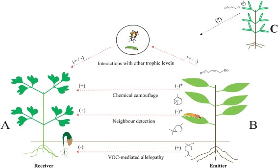 Potential roles of volatile organic compounds in plant
