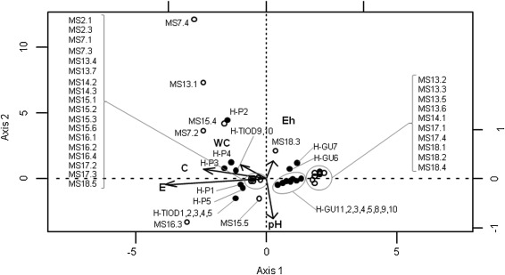 Genetic structure of Spartina hybrids between native