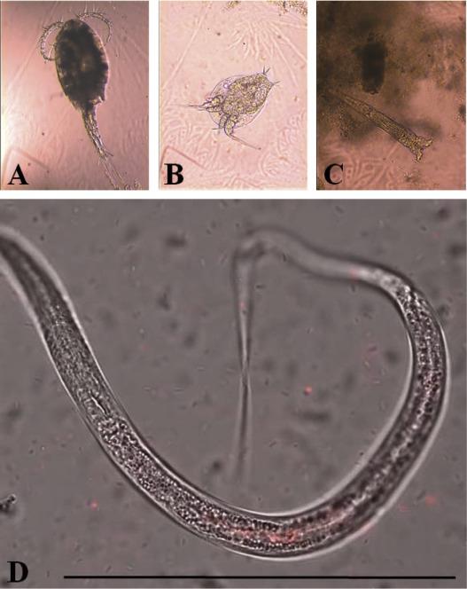 Legionella Protozoa Nematode Interactions In Aquatic Biofilms And