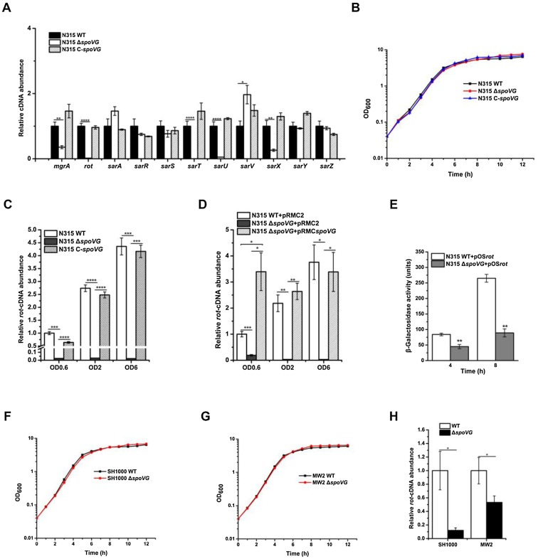 Transcriptional regulation of virulence factors Spa and ClfB