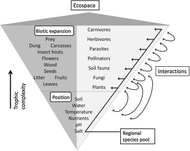 Ecospace: A unified framework for understanding variation in