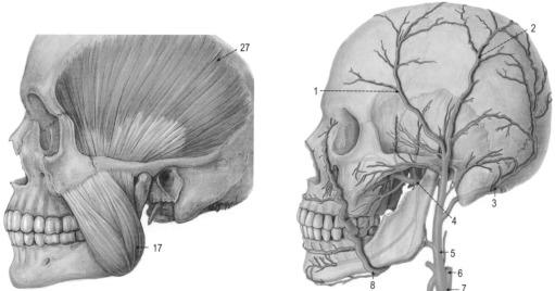 Neuroanatomische Grundlagen neurophysiologischer Untersuchungen ...