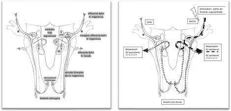 Hirnstammdiagnostik – Möglichkeiten in der Neurophysiologie ...