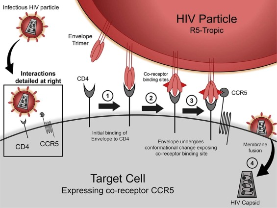 CCR5-edited gene therapies for...