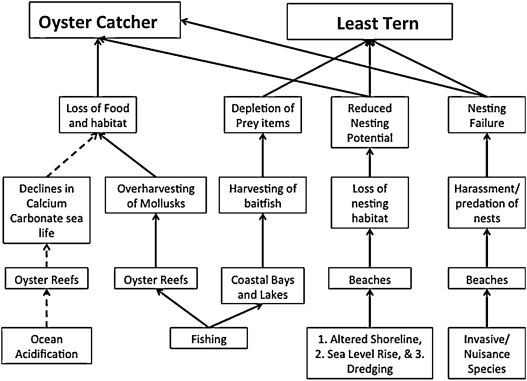 Waterbirds as indicators of ecosystem health in the coastal