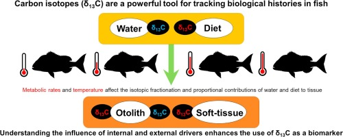 Metabolic effects on carbon isotope biomarkers in fish
