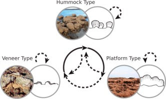 Connecting organic to mineral: How the physiological state